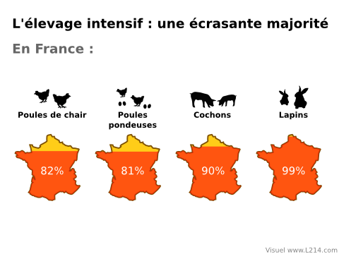 elevage-intensif-ecrasante-majorite-France-480x360